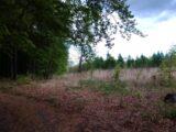 Karviná – Černý les o rozloze 123 hektarů se rozprostírá na severozápadním svahu Rájského kopce v Karviné Ráji s přesahem do polských Kačic. Středem lesa vede česko-polská hranice. V lese […]