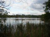 Karviná – Olšinské rybníky v Karviné – Starém Městě na pravém břehu řeky Olše se skládají z jedenácti rybníků rozdělených železniční tratí. Olšinské rybníky se nacházejí na souřadnicích 18° 30′ […]